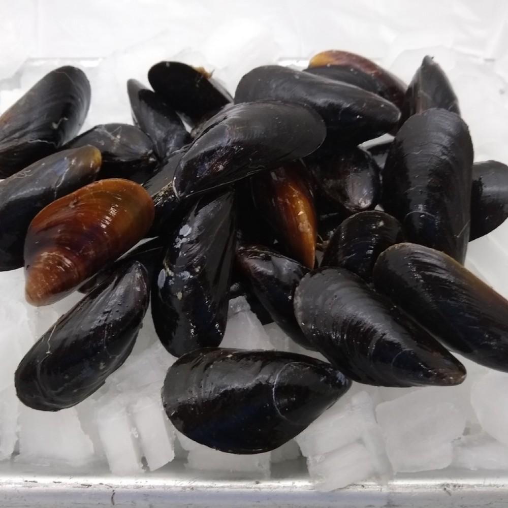 Fresh PEI mussels